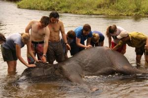 Washing an elephant in Chitwan National Park